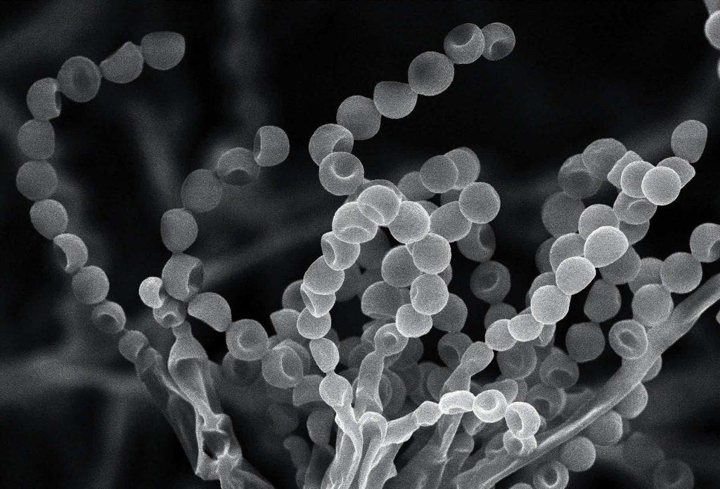 , История создания пенициллина: плесень против микробов